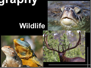 Wildlife Photography Images: pictures of wild animals, wildlife viewing photo image gallery