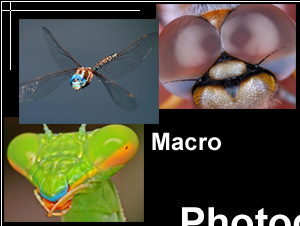 Macro Photography Images: close-up images of insects, pictures of small animals and objects