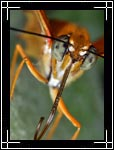 Wildlife Macro Photography Images - Macro Photo Images of Insects - Dryas Julia Butterfly Eyes, Central New Mexico - Macro Pictures