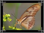 Wildlife Macro Photography Images - Macro Photo Images of Insects - Dryas Julia Butterfly, New Mexico - Macro Pictures